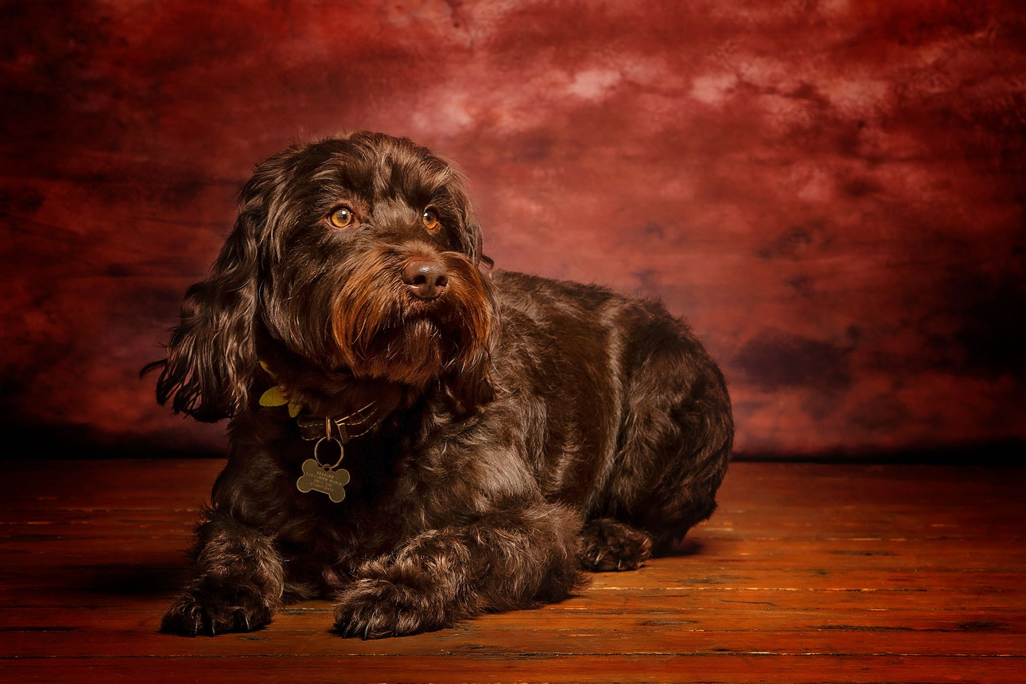 Pet Photography in Northumberland